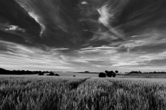 Across the fields from Marsham