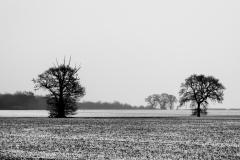 Norfolk Winter #1