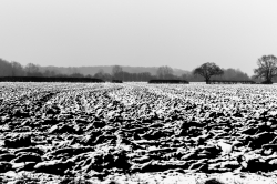 Norfolk Winter #2