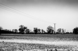 Telegraph Lines in the Snow