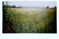 Wildmeadow, Norfolk