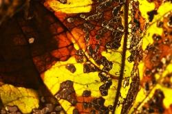 Autumn Leaf #3