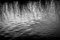 Black Water #7