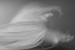 Feather Abstract #1