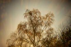 Holga Nature #2