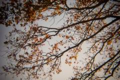 Holga Nature #3