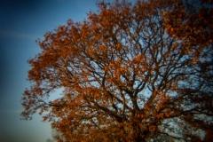 Holga Nature #4