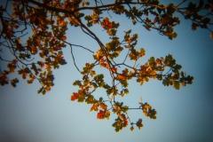 Holga Nature #5