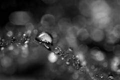 Leaf Droplets #1