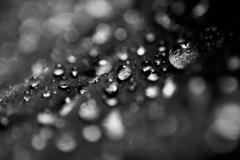 Leaf Droplets #2