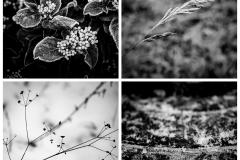 Winter Quartet #1