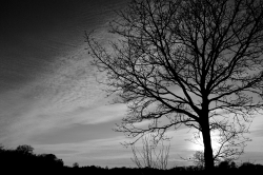 Norfolk Silhouette