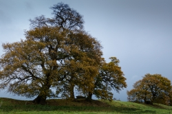Oak Trees, Caistor St Edmund, Norfolk