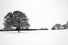 snowandtree.jpg