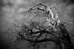 Trees #01