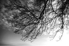 Trees #02