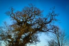 Trees #03