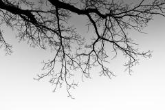 Tree Silhouette #1