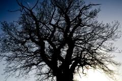 Tree Silhouette #2