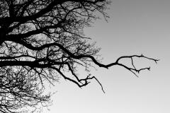 Tree Silhouette #3