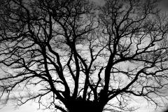 Tree Silhouette #4