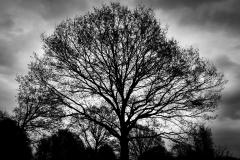 Tree Silhouette #5
