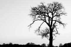 Tree Silhouette #6
