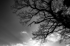 Tree Silhouette #7