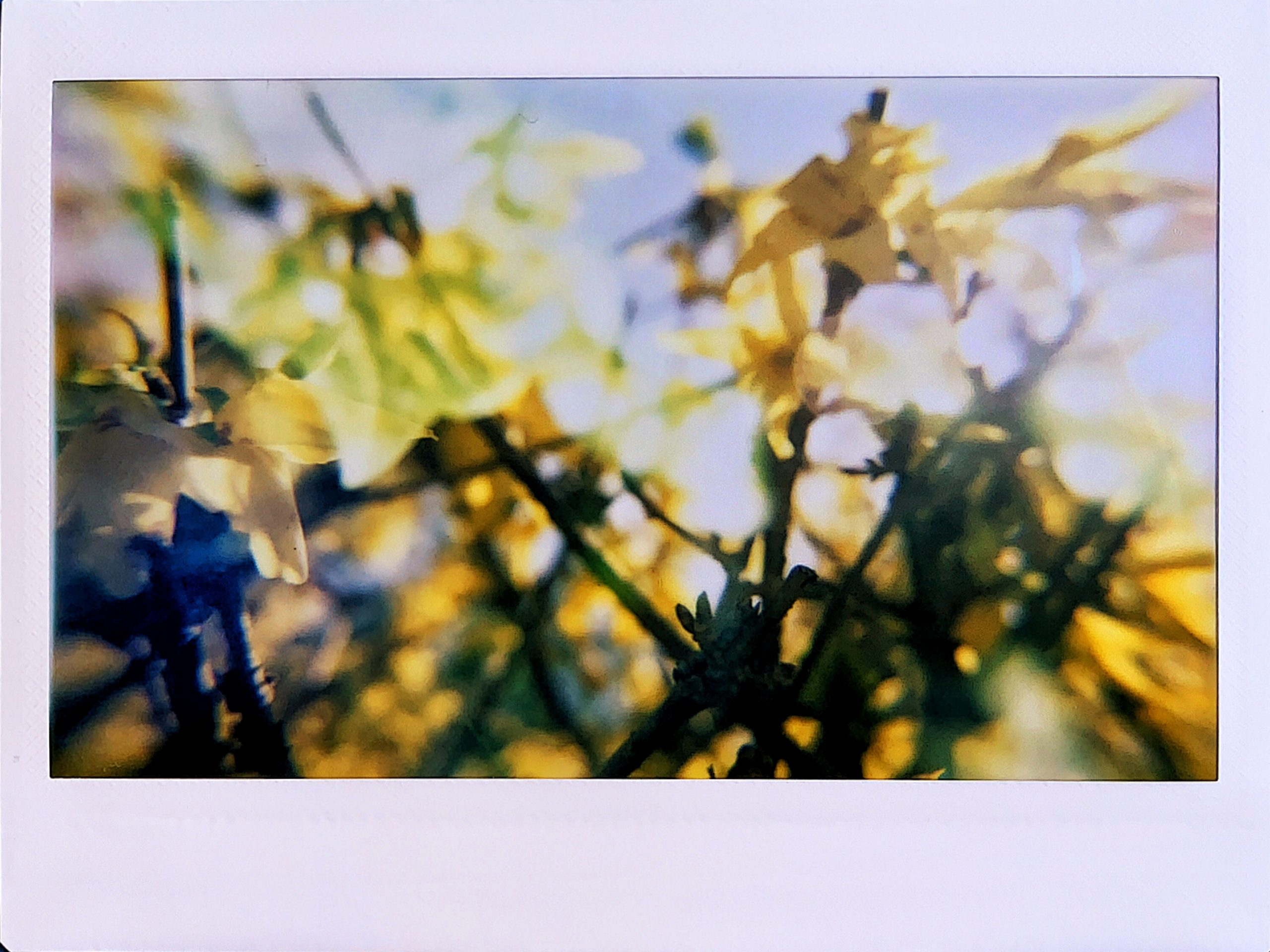 Experimenting with Instant Film